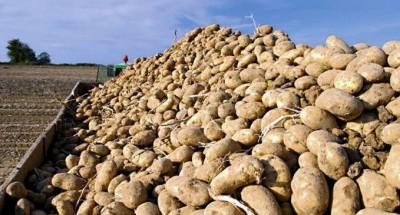 الجزائر:مواطنون يشترون خضرا ممزوجة بالأتربة والحجارة والأوراق والجذور